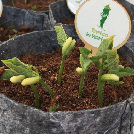 Kit-jardinage-enfant-les-petits-radis
