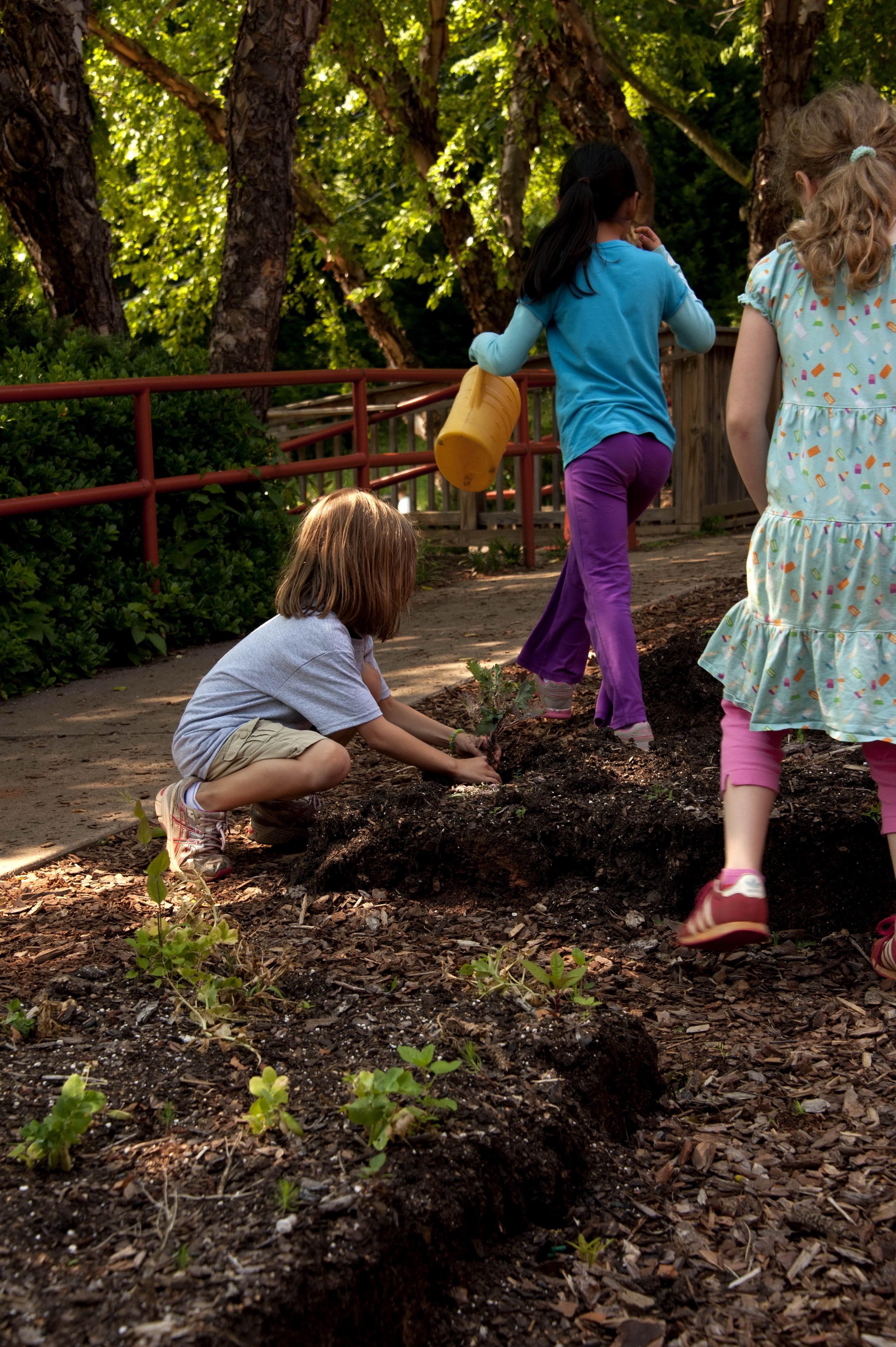 cultiver des légumes à l'école