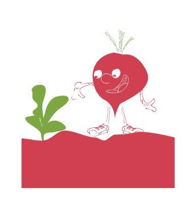 fiche pratique pour apprendre faire pousser les radis au potager avec les enfants. Black Bedroom Furniture Sets. Home Design Ideas