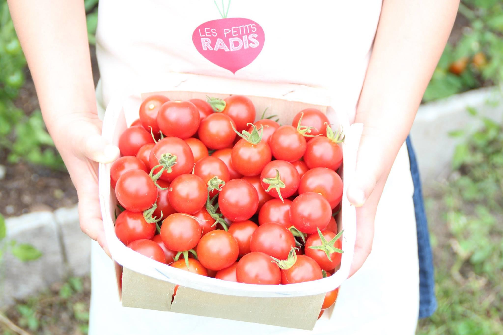 fiche pratique pour apprendre faire pousser les tomates cerises au potager avec les enfants. Black Bedroom Furniture Sets. Home Design Ideas
